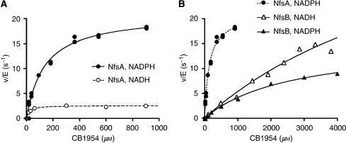 In vitro kinetics of CB1954 activation by purified NfsA and NfsB, using NADH or NADPH as cofactors. Graphs plot initial rate of CB1954 activation (v) normalised by enzyme concentration (E), using 50 μM NAD(P)H at a range of CB1954 concentrations, with Michaelis–Menten curves fitted to the data. (A) Kinetics of NfsA. (B) Kinetics of NfsB (solid lines); for comparison, the dotted line again shows the kinetics of NfsA using NADPH.