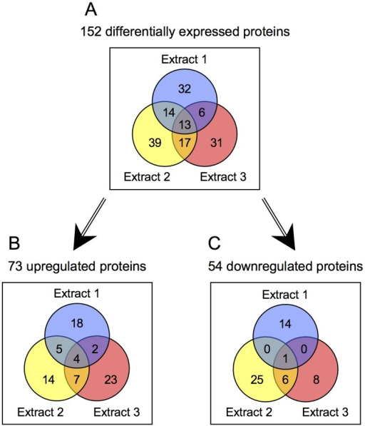 Venn diagrams showing the numbers of differentially expressed proteins identified in Extracts 1–3 over the three biological replicates of the experiment, comparing biofilm to planktonic organisms.The three extraction conditions progressed from the least stringent (Extract 1, 30 mM Tris buffer) to the most stringent (Extract 3, 2% SDS) so as to capture as many different classes of proteins as possible. All proteins represented had quantitation p-values <0.05 and met the 1.5-fold cutoff threshold for differential expression. The diagrams show (A) all differentially expressed proteins, (B) upregulated proteins, and (C) downregulated proteins. Twenty-five of the 152 proteins represented in panel A exhibited variable expression trends across Extracts (see text).