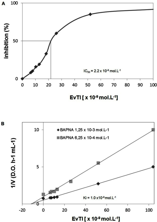 the effect of substrate concentration on trypsin activity Chymotrypsin and trypsin both catalyse the hydrolysis of peptide bonds but due to their shapes, the active site of chymotrypsin only splits bonds after an aromatic amino acid eventually, increasing the enzyme concentration beyond a certain point has no effect because the substrate concentration becomes the limiting factor.