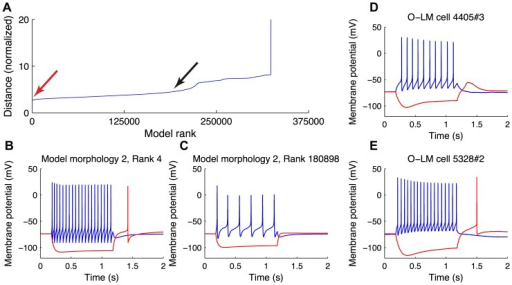 Ranking of O-LM models against experimental data.(A) The ranking of models against O-LM cell experimental recordings shows a gradual decrease of the goodness-of-fit of a given model as the rank of the model becomes poorer. Hyperpolarizing and depolarizing voltage responses of two representative models, a highly-ranked one (B, red arrow in A) and poorly-ranked one (C, black arrow in A) are shown for comparison purposes. Examples of experimental voltage traces are shown in (D, E).