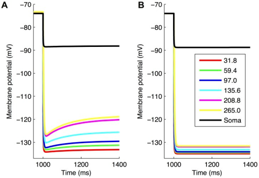 Virtual protocol on models indicates how dendritic Ih may be detected experimentally.Highly-ranked models were subjected to a mixed voltage/current clamp virtual experimental protocol as described in the main text. Somatic and dendritic traces for a highly-ranked model with Ih in soma and dendrites (A) and Ih in soma only (B). The maximum conductance density for gh was 0.5 pS/µm2 for the model with Ih in soma and dendrites (A) and 0.3 pS/µm2 for the model with Ih in soma only (B). Both models used morphology 1. Somatic traces are shown in black, and dendritic voltage traces, measured along various points on the same dendritic branch, are shown at distances for both models as per the figure legend (all numbers in µm).