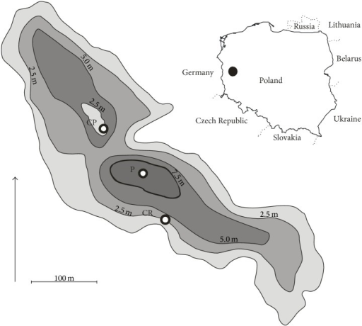 Location of Lake Jasne (mid-western Poland) and distribution of the sampling sites: P: pelagial, CP: C. polyacantha, and CR: C. rudis.