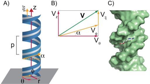 Schematic representation of the helical coordinates system.A) The helical coordinate system establishes the position of the ligand center of mass with respect to the DNA's axis. The DNA axis was aligned to the z-axis. The helical coordinate system is defined in terms of coordinates (ρ, ϕ, ξ) (in yellow). Coordinates (r, θ, z) (in red) correspond to a cylindrical coordinate system. p is the pitch of the helix and α the pitch angle. B) The components of a vector V in a surface of constant ρ in both helical (yellow) and cylindrical coordinates (red). C) Snapshot of the initial DNA methyl-guanidinium complex.