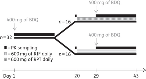 Schematic of the dosing regimen and PK sample collection. BDQ, bedaquiline; RIF, rifampicin; RPT, rifapentine.
