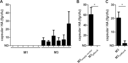 Serotype M3 capsule expression is derepressed by RocA M3 truncation. (A) M3 GAS express more capsule than M1 (n = 5 strains/group); however, capsule levels in M3 GAS were reduced by overexpression of full-length RocA (B) or chromosomal integration of a single copy of full-length RocA (C). All strains were wild type for CovR/S. M3 strains contained serotype-specific mutations in fasC, rivR, and rocA; M1 strains were wild type for these regulators. Data represent means (plus standard deviations) of results from 3 or 4 individual experiments. ND, not detected (below the limit of detection); *, Mann-Whitney P < 0.05.