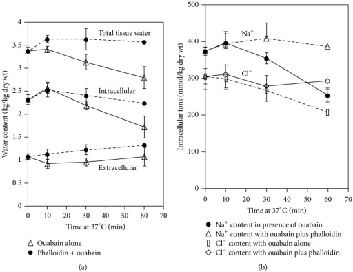 Effect of phalloidin (12 μM) in the presence of ouabain (2 mM) on water (a) and ion (b) content of liver slices incubated for 90 min at 1°C followed by 60 min at 37°C. Water content was paralleled to the retention of Na+ and Cl− [7].
