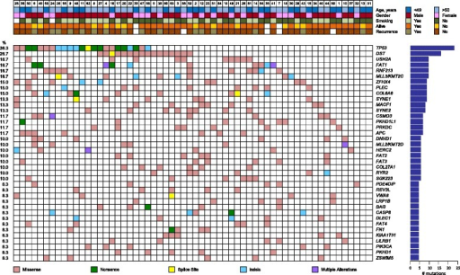 Mutation plot summary of 60 oral tongue squamous cell carcinoma patients showing frequently mutated genes. The top plot shows the key clinical parameters, below which the mutation status of the recurrently mutated genes for each tumor is indicated. Somatic mutations are colored according to functional class according to the legend below the plot. Prevalence is indicated as number of mutations in the graph on the right and mutational frequency is given on the left of the mutation plot