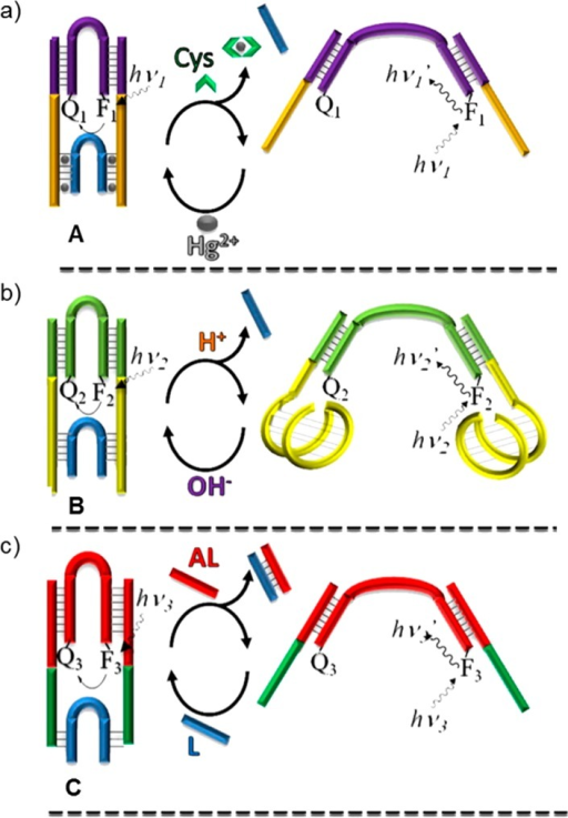 (a) Tweezer A: in the closed form the arms are boundto the linker unit (blue) by Hg2+ ions through T–Hg2+–T bonds. To open the molecular tweezer, Hg2+ is sequestered by the addition of cysteine. (b) Tweezer B: in acid the arms form an i-motif, thus releasingthe linker unit, whereas at pH = 7.2, the i-motifis destroyed resulting in the stabilization of the closed structure.(c) Tweezer C: the linker unit can be released by a complementarystrand, the antilinker that opens the tweezers. Reprinted with permissionfrom ref (1914). Copyright2010 American National Academy of Sciences.