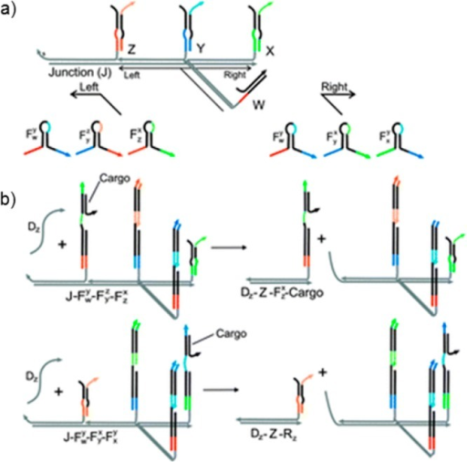 Walker with a choice of path at a junction. (a) Initially cargoresides on position W, and (b) the use of different set of fuels (F)leads to transport of cargo to either position. A displacing strand(Dz) was used for the fragmentation of the molecular ensemble andsubsequent analysis of the cargo position. Reprinted with permissionfrom ref (1843). Copyright2011 American Chemical Society.