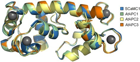 Structural alignment of the N-terminal domains of AtAPC1-3 and human SCaMC1. Three-dimensional homology models of AtAPC1 (residues 34–189, green), AtAPC2 (residues 38–194, yellow) and AtAPC3 (residues 35–189, orange). N-terminal domains were built using HHPred server and Modeller based on the crystal structure of the Ca2+-binding N-terminal domain of human SCaMC1 (blue; PDB ID: 4N5X) in complex with four calcium ions (gray spheres). The sequence alignment followed by a structural superimposition of the models was carried out using PyMOL (version 1.3)