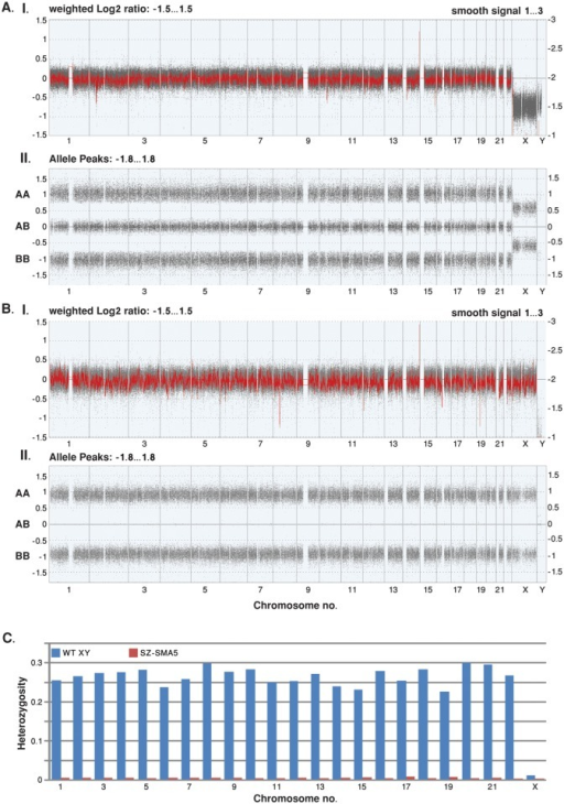 Whole genome view of Cytoscan SNP Array data.Genome wide SNP array results obtained from (A) reference DNA from a male with a normal karyotype (46; XY); and (B) SZ-SMA5 HESC line DNA. The X axis represents chromosomes 1–22, X and Y. (I) The Y axis represents the copy number, determined by the log2 ratio (grey dots) on the left side of the graph, and it's smoothed ratio (red line) on the right. The expected copy number is 2 for autosomal chromosomes (log2 of 0 and smooth signal of 2). The log2 ratio and the smooth signal are determined from both the nonpolymorphic copy number probes and the polymorphic SNP probes. (II) The Y-axis corresponds to homozygote calls (AA or BB) and heterozygote calls (AB). Allele peaks of 1, 0, and -1 indicate a copy number of two, while allele peaks of 0.5 and -0.5 indicate a copy number of one. Allele peaks are calculated from SNP probes. The distinction between XY (reference DNA) and XX (SZ-SMA5) cells is clearly illustrated by the difference in X chromosome copy number. In addition, the overall 0.49% inherent heterozygote call error rate in SZ-SMA5 is below even the expected array genotyping error of ~1% (as determined by dividing the number of heterozygous calls by the total number of SNP probes on the array). Therefore, these data indicate that SZ-SMA5 features a completely homozygous diploid genome. (C) Fraction of SNP heterozygote calls in WT male reference and SZ-SMA5 DNA. Chromosomes are indicated in the X axis and the Y axis indicates the fraction of heterozygous SNP calls per total SNP calls on each chromosome.