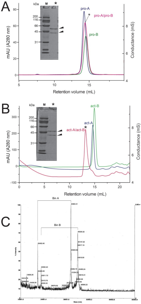 Gel filtration of pro- and act-Bin subunits.(A) Elution profile of pro-A, pro-B, and their mixture (1:1 molar ratio, *); (B) the same as (A) for act-A and act-B. Protein concentration before and after chromatography was typically 60 μM and 18 μM (total monomer), respectively. The SDS PAGE gel for the elution band of the 1:1 mixture is shown in the insert; (C) MALDI-TOF mass spectrum of the elution band shown in B. Four peaks are observed, associated with masses of approximately 40 kDa (mass to charge ratios (m/z) of 40,800 and 20,402 Da) and 45 kDa (m/z of 22,500 and 45,026 Da).