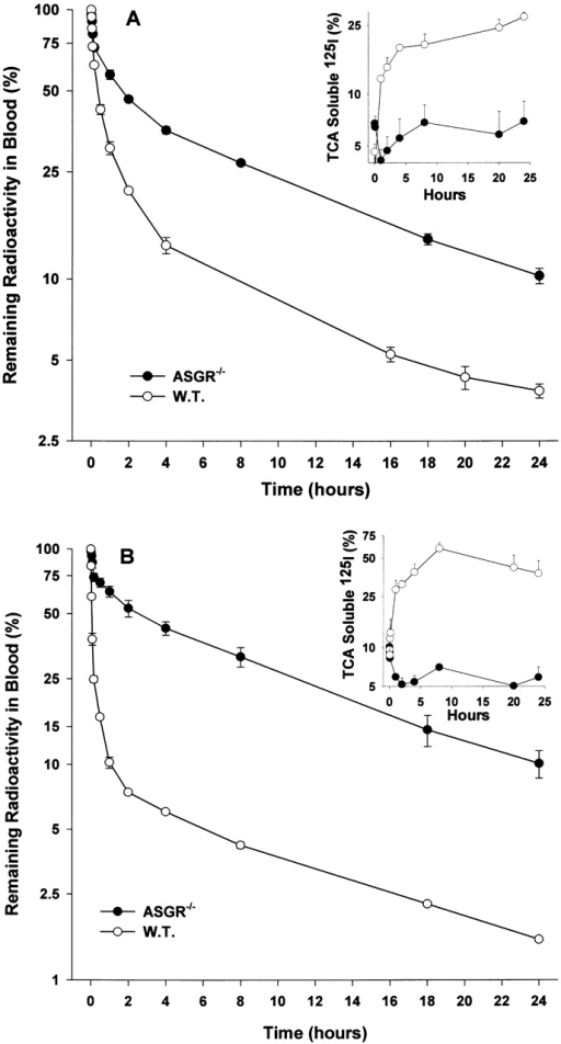 Comparison of kinetics of serum clearance of IgA2m(1) and IgA2m(2) in C57BL/6 (W.T.) and ASGR−/− knockout mice. Radiolabeled IgA2m(1) (A) or IgA2m(2) (B) was injected into the tail vein of C57BL/6 or ASGR−/− knockout mice. At the indicated time points, the IgA remaining in the blood was determined as described in the legend to Fig. 3. The amount of TCA-soluble material present in the blood at the different times is shown in the insert. Each data point represents the mean ± SD of three mice.