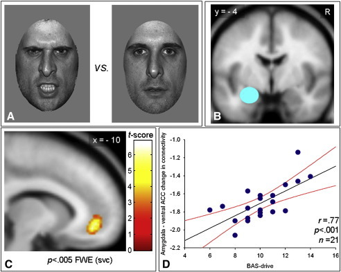 (A) Example faces during the gender discrimination task. Either an angry or neutral face was presented on each trial. (B) Source region for the PsychoPhysiological Interaction (PPI) in the General Linear Model (GLM). The left amygdala was defined as a 10 mm sphere using two different approaches (see PPI GLM Experimental Procedures for details). The slice shown is at y = − 4 mm in MNI space (Montreal Neurological Institute). R: right side. (C) PPI GLM Statistical Parametrical Map (SPM). This SPM {t} map for the higher order PPI demonstrates that the ventral Anterior Cingulate Cortex (ACC) is connected with the amygdala (source region) as a function of the angry context and of the reward–drive (appetitive motivation) personality. Color bar represents t statistics (see the PPI GLM Results section for details). FWE: Family Wise Error, small volume correction (svc) (see the PPI GLM Results section for details). The slice shown is at x = − 10 in MNI space (Montreal Neurological Institute). The whole-brain map is thresholded at p < .001, uncorrected. (D) Data plot for the PPI showed in the panel C. There is a highly statistically significant correlation (r = .77, p < .001) between the PPI (i.e. the amygdala-ventral ACC connectivity as function of the angry context) and the individual differences in reward–drive score with participants scoring lower presenting the more negative connectivity as opposed to individuals scoring higher displaying the less negative values. The regression line (black) and the 95% confidence intervals (red lines) are shown. BAS–drive: Behavioral Approach System–drive subscale (reward–drive or appetitive motivation).