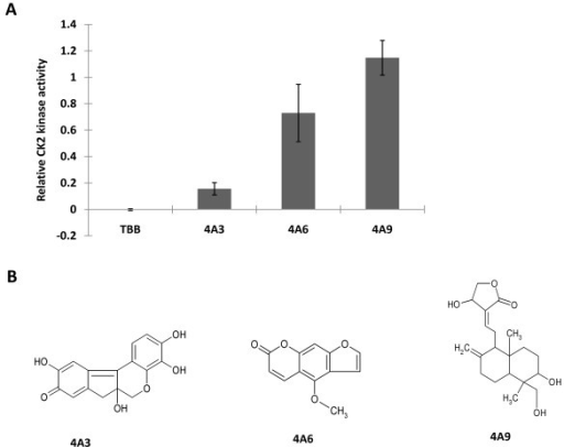 Validation of inhibition effects of selected compounds on CK2 kinase activity and structures of compounds. A. Inhibition effects of selected compounds on CK2 kinase activity was validated by radioisotope kinase assay at a concentration of 10 μM compound using 10 μM ATP. TBB is the positive control. Ck2 kinase activity is represented as relative CK2 activity to controls (DMSO). Data represents the average of duplicate experiments and bars indicate SD.4A3: hematein. B. Structure of compounds: 4A3 (hematein): 3, 4, 10, 6a-tetrahydroxy-7, 6a-dihydroindeno [2, 1-c] chroman-9-one MW 300.26, CAS No. 15489-90-4; 4A6: 5-methoxyfurano [3,2-g]chromen-2-one; 4A9: 4-hydroxy-3-{2- [8-hydroxy-7-(hydroxymethyl)-1,7-dimethyl-3-methylenebicyclo[4. 4.0]dec-2-yl]ethylidene}-4,5-dihydrofuran-2-one.