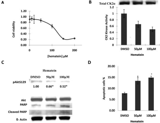"Inhibition effects of hematein on cellular viability and kinase activity in cancer cells. A. A549 cells were treated with serial dilutions of hematein (0 to 200 μM) and cellular viability (normalized to DMSO control) was measured after 48 hours. Data points represent the average of duplicate wells in triplet experiments and bars indicate SD. B. A549 cells were treated with DMSO (control), 50 μM and 100 μM of hematein for 48 hours. Upper western blot panel showed total amount of CK2 used for CK2 kinase assay, and lower table showed relative CK2 kinase activity (normalized to DMSO control) under different hematein concentrations. Data points represent the average of duplicate experiments and bars indicate SD. C. Phosphorylated Akt (Ser 129), total Akt, and PARP were measured by western blot analysis. β-Actin was used as internal loading control. Bands quantization of phosphorylated Akt (Ser 129) was obtained by an analysis with Quantity One 1-D analysis software. Values are reported below each band and normalized to DMSO control. ""*"" denotes p < 0.05 when compared with control values in triplet experiments. D. The fraction of cells undergoing apoptotic cell death was detected using annexin V FITC and PI stain. Data points represent the average of triplet independent experiments and bars indicate SD. ""*"" denotes p < 0.05 when compared with the control values."