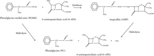 hydrolysis of ampicillin