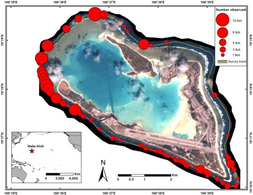 Distribution of Bolbometopon muricatum at Wake Atoll observed during towed-diver surveys from 2005–2009.Surveys were conducted on a biennial basis by the NOAA Coral Reef Ecosystem Division. Circles indicate the total number of fish observed at each location around the atoll.