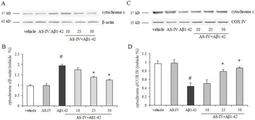 AS-IV inhibited Aβ1-42-induced cytochrome c release from mitochondria in SK-N-SH cells.A. A representative blots of immunoreactive bands for cytochrome c in cytosol. B. Data were expressed as fold-increase of cytochrome c relative to vehicle. Protein expression levels were normalized to β-actin. C. A representative blots of immunoreactive bands for cytochrome c in mitochondria. D. Data were expressed as fold-increase of cytochrome c relative to vehicle. Protein expression levels were normalized to COX IV. #P<0.01 vs vehicle; *P<0.01 vs Aβ1-42 (n = 4).
