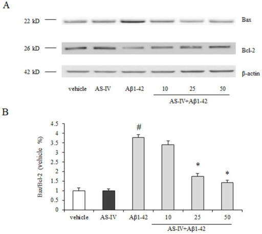 AS-IV inhibited Aβ1-42-induced increase of Bax/Bcl-2 ratio.(A) Western blot results of AS-IV on expression of Bax and Bcl-2. (B) The quantification of immunoreactive bands for Bax and Bcl-2 relative to β-actin and the Bax/Bcl-2 ratio was determined. #P<0.01 vs vehicle; *P<0.01 vs Aβ1-42 (n = 4).