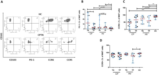 Expression levels of different markers by CD161++CD8+ T-cell subsets in the study population.(A) Zebra plots of double-gating strategy (gated on the CD161++ CD8+ T cells) show staining with 4 different markers (CD103, PD-1, CCR6, CCR5) on representative samples from a HC and a CPTN. HCs showed increased amount of CCR6-expressing MAIT cells and decreased amount of PD-1 expressing MAIT cells compared to CPTNs. (B) HC showed significantly lower expression level of inhibitory receptor, PD-1 while HIV/TB co-infected patients show significantly increased PD-1 expressing MAIT cells. (C) Significantly increased CCR6-expressing MAIT cells were found in HCs compared to HIV and TB infected groups. (D) No significant difference was observed in CCR5 expression levels by MAIT cells among the different study subjects. The significant difference in CCR5 expression between HVTPs and HCs may be due to the limited number of samples. All graphs show median (red bars) and range (blue whiskers); P values are reported for two-sided Mann-Whitney tests with threshold for significance P = 0.025 after Bonferroni correction for 2 comparisons. (Note: TN, treatment naïve; TP, treatment positive; HC, healthy control; CP, HIV/TB co-infection; HV, HIV mono-infection).