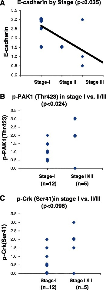 PAK1 activation is correlated with tumor stage at presentation. A-Dot plot demonstrating the expression of E-cadherin in the examined tumors in relation to the surgical stage of each tumor. The correlation between variables were examined by Spearman Rank Correlation analysis. B- Dot plot demonstrating the expression of p-PAK1(Thr423) in stage I and stage II/III tumors. The mean between groups was compared by student T-test. C- Dot plot demonstrating the expression of p-Crk-II(Ser41) in stage I and stage II/III tumors. The mean between groups was compared by student T-test.