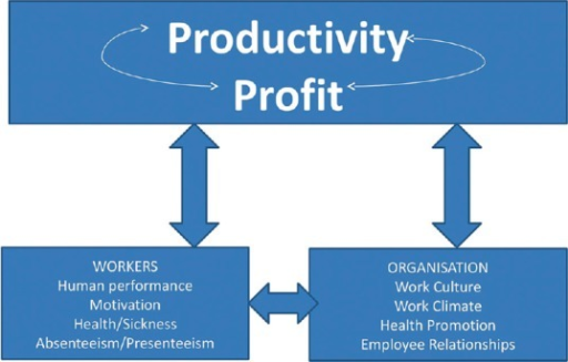 Cycle of productivity on which the study was based