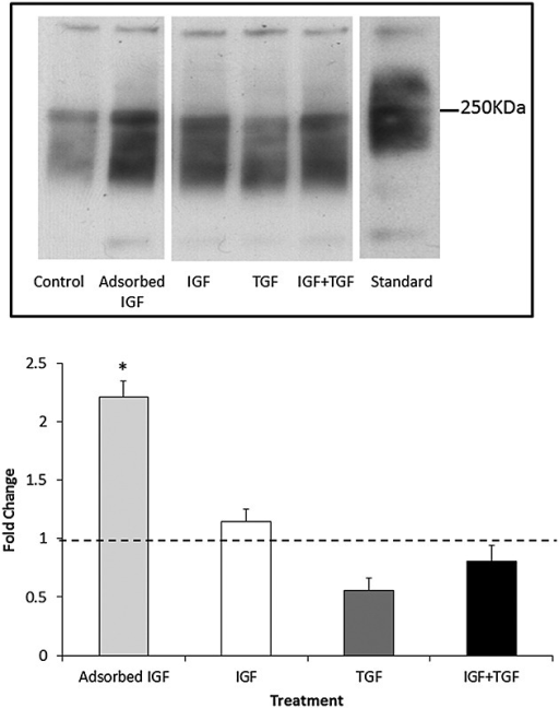 Decorin deposition within the scaffold. (Top) Representative Western blot demonstrating the amount of decorin deposited by osteoarthritis chondrocytes within each scaffold group. Concentration of growth factors as in Table 1. Standard = extract of whole human articular cartilage. (Bottom) Decorin deposition in scaffolds quantified by densitometry of Western blot (top) expressed as fold change compared with the no-growth factor control group. N = 3 donors, N = 3 replicates. * represents a statistically significant difference between groups (p < 0.05) compared with control. IGF, insulin-like growth factor; TGF, transforming growth factor