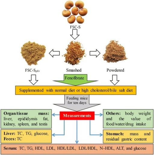 Experimental design of studies on FSC-S and FSC-SpEt in normal and HCL mice. Abbreviations: FSC-S: Fructus Schisandrae Chinensis seed; FSC-SpEt: post-ethanol extraction residue of FSC-S; TC: total cholesterol; TG: triglyceride; LDL: low-density lipoprotein; HDL: high-density lipoprotein; N-HDL: non-HDL; ALT: alanine aminotransferase; HCL: hypercholesterolemia