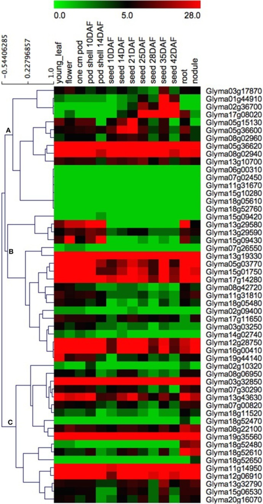 Heat map of the expression profiles of GmHSP70 candidate genes in 14 tissues. RNA-seq relative expression data from 14 tissues were used to reconstruct the expression patterns of soybean genes. Genes were clustered into three groups (A–C). The raw data was normalized and retrieved from the online database http://soybase.org/soyseq/. The normal relative expression levels of 53 GmHSP70 genes are shown in Additional File 12.