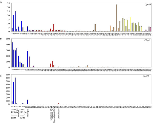 Macrophage-restricted GPCRs. Micro-array analysis of Gpr85 (A), P2ry6 (B) and Gpr84 (C) mRNA expression across a panel of 91 murine cell types and tissues. Data points show normalised values and similar cell types are grouped according to bar colour; blue indicates primary macrophage cell types, purple indicates bone-related cell types, red indicates other immune cell types, green indicates stem cell populations, orange indicates whole tissue samples, yellow indicates neuronal and retinal cell types and pink indicates cell lines. Additional file 3 gives details of the 91 cell types and tissues profiled.