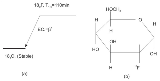 Decay scheme of 189F (a), and molecular formula of FDG (C6H11FO5) (b).[11]