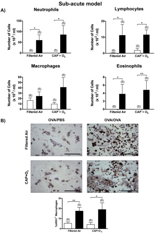 Bronchoalveolar lavage differential cell counts and macrophage expression of arginase 1. A) Differential cell counts from BAL samples in the sub-acute model OVA/PBS (□) and OVA/OVA (■) mice exposed to FA or CAP+O3 (*P < 0.05). (B) Images of arginase 1 immunostained slides of BAL samples and quantification of the percentage of positive macrophages (400× magnification; bar = 100 μm; brown colour indicates positivity; representative images of n = 5-6/group; *P < 0.05, **P < 0.01).