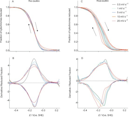 Voltabsorptometry profiles for G. sulfurreducens biofilms less than 5 μm thick which were depleted of acetate. Data in (A) shows how cytochrome redox status remains similar as scan rate is increased, irrespective of direction, and the derivative in (B) reveals the slight broadening of the response without peak shifting. C, D) Voltabsorptometry profiles for G. sulfurreducens biofilms 20 μm thick, which were depleted of acetate. Beyond scan rates of 1 mV s−1, c-type cytochrome absorbance lagged behind changes in electrode potential, producing the hysteresis in the higher potential window in (C), and peak shifting of the derivative in (D).