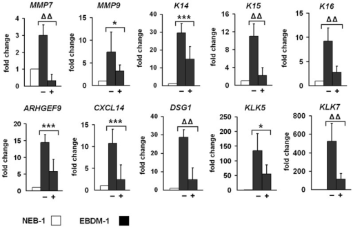 Reduced expression of target genes upon IL-1β depletion.NEB-1 cells and EBDM-1 cells were incubated with 2 µg/ml IL-1β neutralizing antibody for 24 h to deplete IL-1β in the culture medium. Expression of untreated EBDM-1 cells (−) was compared to treated EBDM-1 cells (+) by SQRT-PCR. We picked at least one representative target gene of each of the six functional groups identified in the microarray. All investigated targets showed significant downregulation after IL-1β depletion. No differences in geneexpression were observed in NEB-1 cells −/+ antibody incubation (n = 3). Student's t-test was performed with p values: * ≤0.05, *** ≤0.005, ΔΔ ≤0.0005.