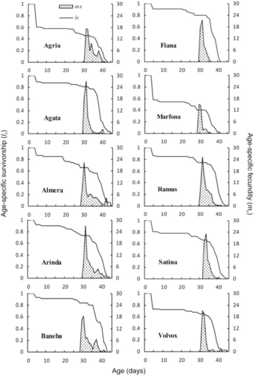 Age-specific survival rate (lx) and fecundity (mx) of Phthorimaea operculella reared on different potato cultivar tubers. High quality figures are available online.