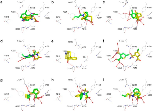 Comparisonof docking-predicted (yellow) and crystallographic fragmentgeometries (green) for five NMR hits (a–e) and four dockinghits (f–i): (a) 5, (b) 13, (c) 16, (d) 20, (e) 41, (f) 44, (g) 48, (h) 50, and (i) 60 superposed on 54. Protein residues are depicted withgray carbon atoms, crystallographic water molecules as red spheres,and hydrogen bonds as red dashed lines.