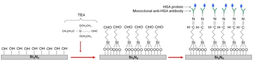 Scheme of the silicon nitride surface functionalization of the direct immobilization of anti-HSA antibodies.