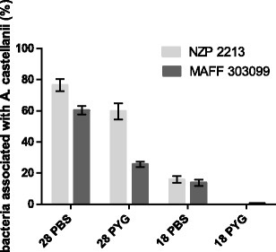 A level of binding/association of Mesorhizobium spp. with A. castellanii Neff presented as a percentage of bacterial inocula (CFU = 6 × 106) vs. temperature (28 and 18 °C) and medium type (PBS vs. PYG). Results are the mean of three independent experiments performed in duplicate. Error bars represent standard deviation (n = 3)