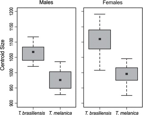 Wing centroid size variation among males and females of T. brasiliensis and T. melanica. This shows the sexual size dimorphism. The group mean is shown as a box between the quartiles (25th and 75th percentiles) and the standard deviations are shown as lines. Units are pixels