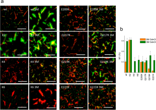 Surface reactivity of PrP wt and mutant fibrils.(a) Representative fluorescence images of the fibrils formed by the PrP wt and mutant fibrils stained with AB3531 (red) and POM17 (green). Pretreatment with 3 M GdnCl is indicated as 3 M. The white bar represents 5 μm. (b) Effect of charges on the variation of the POM17 overlap with AB3531 (Manders overlap coefficient) based on the denaturant concentration. Error bar represents the standard deviation (s.d.).