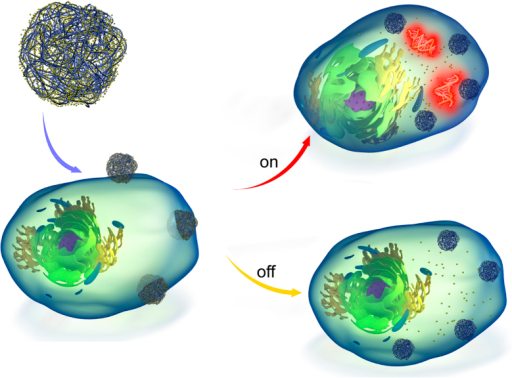 Schematic illustration of the nanosensor platform and intracellular implementation.