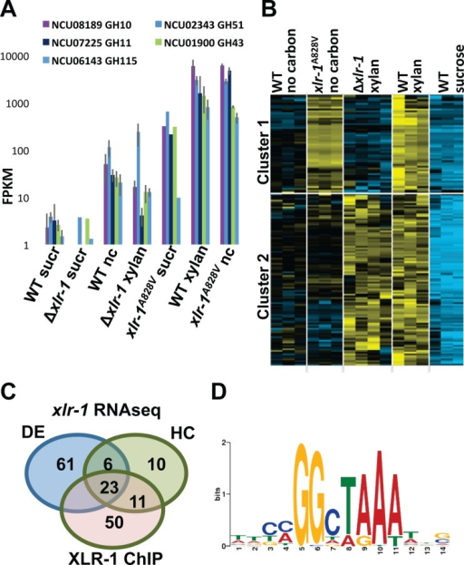 Identification of XLR-1 regulon, direct targets, and XLR-1 binding site. (A) RNAseq analyses of the most highly expressed hemicellulase genes in the xlr-1A828V strain relative to the WT strain and a Δxlr-1 mutant shifted to sucrose (sucr), no-carbon (nc), or xylan medium conditions. (B) Hierarchical clustering of gene expression of the strains shown shifted to sucrose, no-carbon, or xylan conditions. Genes within cluster 1 are dependent upon XLR-1 for expression. (C) Venn diagram depicting overlap of genes that show differential expression (DE), genes that have similar expression patterns through hierarchical clustering (HC) in the WT strain versus the xlr-1A828V strain under no-carbon conditions (Cuffdiff; Padj = <0.05; 4-fold), and genes that showed significant binding of XLR-1 in their promoter regions (XLR-1 ChIP). (D) Consensus binding sequence for XLR-1 based on promoter regions bound by XLR-1 in the ChIPseq data.
