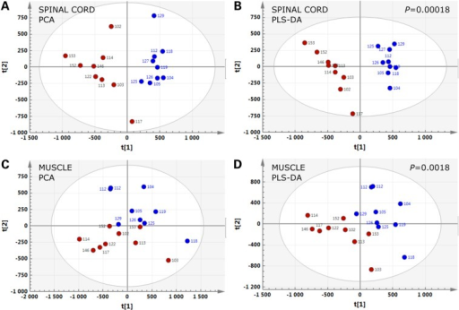 Lipidomic signatures in spinal cord and muscle of SOD1(G86R) mice. PCA (A and C) and PLS-DA (B and D) score plots showing the spatial distribution of SOD1(G86R) mice at the pre-symptomatic stage (blue circles, n = 9) and WT littermates (red circles, n = 9), according to the lipidomic profiles of spinal cord (A and B) and muscle (C and D).
