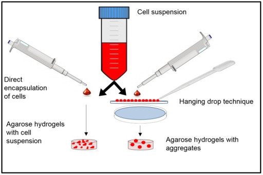 Schematic representation of the hanging down approach and aggregate-encapsulation in agarose hydrogels.The aggregates/CS is encapsulated in pre-polymer solution and undergoes thermal crosslinking to form the hydrogel.
