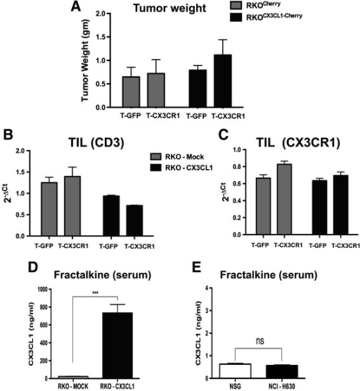 Adoptive transfer of CX3CR1-positive T cells to mice bearing RKO tumors over-expressing Fractalkine/CX3CL1. a Weight of RKO-Mock or RKO-CX3CL1 tumors after adoptive transfer of GFP-T cells or CX3CR1-T cells. (b, c) mRNA expression of CD3 and CX3CR1 (human specific primers) from RKO-Mock or RKO-CX3CL1 tumors receiving GFP-T cells or CX3CR1-T cells. d Quantification of Fractalkine in the blood serum of mice bearing RKO-Mock or RKO-CX3CL1 tumors. e Quantification of Fractalkine in the serum of mice bearing NCI-H630 tumors or in non-tumor-bearing mice