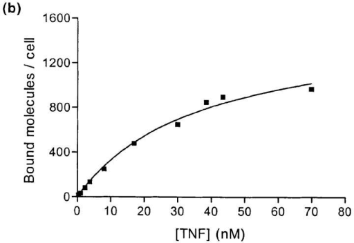 Binding of 125ITNF-α to bloodstream-form  and procyclic trypanosomes.  (a) Bloodstream-form trypanosomes (▪) and procyclic trypanosomes (□) were incubated in the presence of  different molar concentrations of 125I-TNF-α. Bloodstream forms were also incubated with 125I-TNF-α in the presence of a 100-fold molar excess of cold TNF-α (•). The number of bound molecules per cell was plotted  in function of the dose of 125I-TNF-α added. (b) Specific 125I-TNF-α binding to bloodstream-form trypanosomes. (c) Scatchard plot presentation of the same results. All the results shown are from one representative experiment.