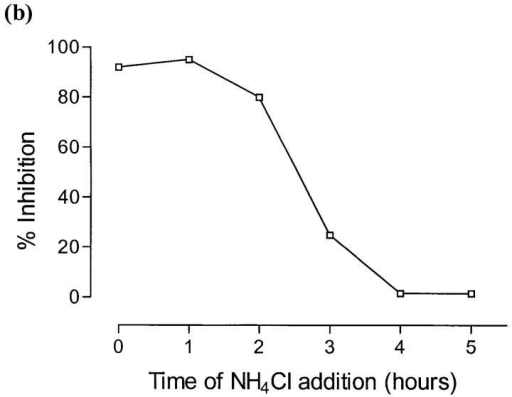 Inhibition of TNFα–mediated trypanolysis by  NH4Cl. Lysis assays were  carried out as described in  Materials and Methods. (a)  NH4Cl effects on lysis of T.  brucei as function of concentration. Trypanosomes were  incubated at 30°C in the presence of 104 U/ml TNF-α and  different concentrations  NH4Cl. (b) Effects of NH4Cl  on trypanolysis as function of  addition after preincubation  of parasites with TNF-α.  Trypanosomes were incubated for 5 h at 30°C in the  presence of 104 U/ml TNF-α.  Every hour NH4Cl was  added to one sample to a final concentration of 1 mM.  The percentage of lysis inhibition was calculated compared to a  control lysis of 104 U/ml in the absence of NH4Cl.