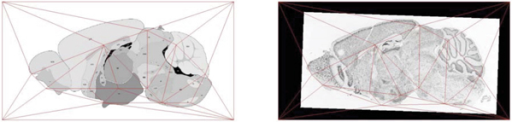 Delaunay triangulation of landmarks. The left image shows the Delaunay triangulation based upon a set of landmarks in the reference image. The right image shows the corresponding triangulation of mapped points in an expression image. Triangulation in the right image might not be the Delaunay triangulation.