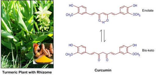 Curcuma longa Plant and chemical structure of curcumin, the active ingradient of rhizome termeric. The tautomerism of curcumin is demonstrated under different physiological conditions. Under acidic and neutral conditions, the bis-keto form (bottom) is more predominant than the enolate form.